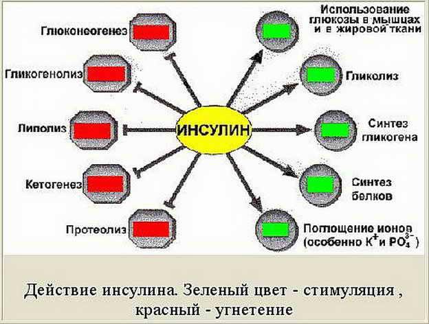 https://www.google.com.ua/url?sa=i&rct=j&q=&esrc=s&source=images&cd=&cad=rja&uact=8&ved=0ahUKEwjr3JrYq7DSAhWE6RQKHeePAkoQjRwIBw&url=http%3A%2F%2Fwww.beloveshkin.com%2F2015%2F09%2Finsulin-edinstvo-i-borba-protivopolozhnostej.html&psig=AFQjCNF5nU_TjwOGK_uHFBTPz59t_oA7xg&ust=1488287107141756