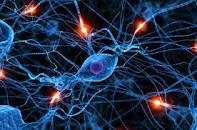 https://www.google.com.ua/url?sa=i&rct=j&q=&esrc=s&source=images&cd=&cad=rja&uact=8&ved=0ahUKEwjn-pDW29XSAhXEdCwKHaNTDzAQjRwIBw&url=http%3A%2F%2Fwww.vsdystonia.ru%2Fcentral-nervous-system-disorders.php&psig=AFQjCNGEKYlweEcPj8IVsIQeNWF_D6j5mw&ust=1489571298900884