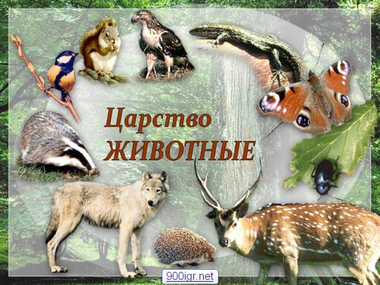 Мир биологии живые царства животные урок 10